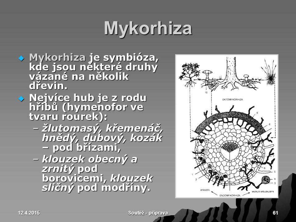 Mykorhiza Mykorhiza je symbióza, kde jsou některé druhy vázané na několik dřevin. Nejvíce hub je z rodu hřibů (hymenofor ve tvaru rourek):