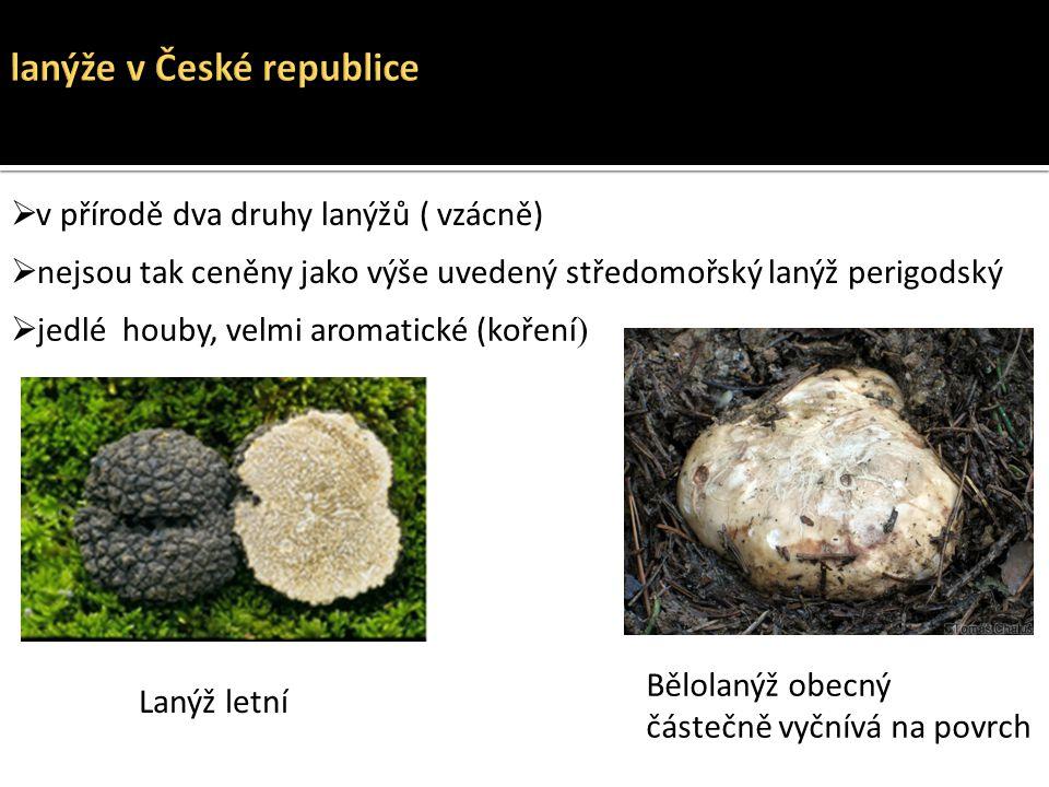 lanýže v České republice