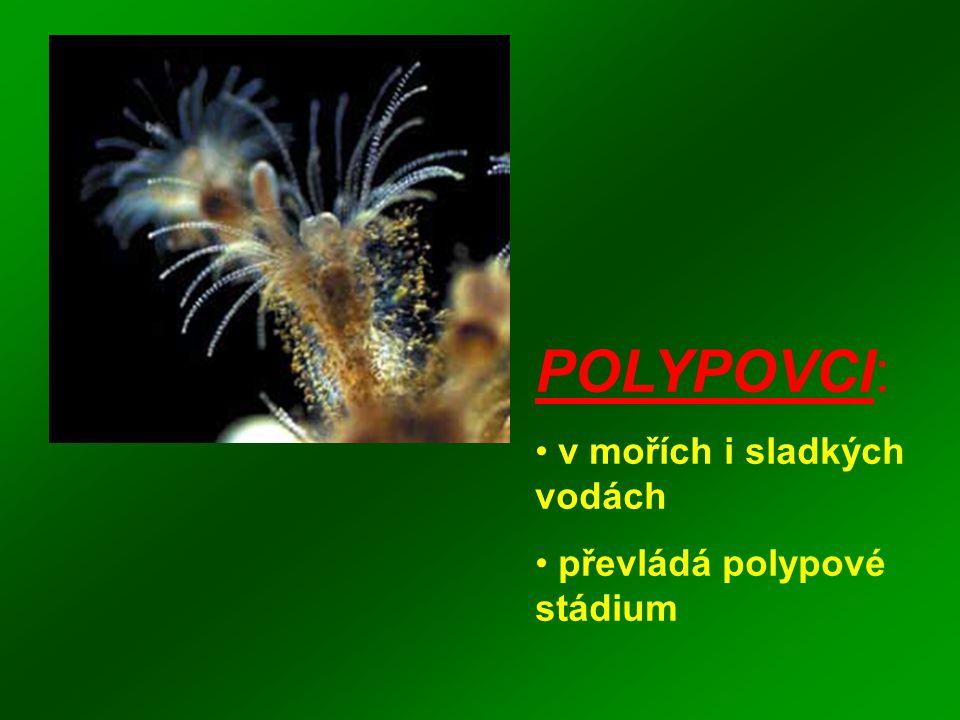 POLYPOVCI: v mořích i sladkých vodách převládá polypové stádium