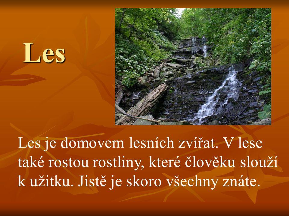 Les Les je domovem lesních zvířat. V lese také rostou rostliny, které člověku slouží k užitku.