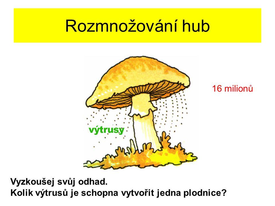 Rozmnožování hub 16 milionů Vyzkoušej svůj odhad.