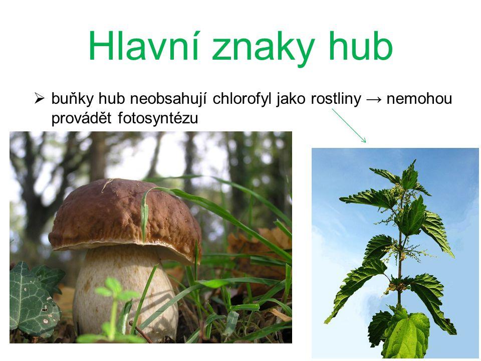 Hlavní znaky hub buňky hub neobsahují chlorofyl jako rostliny → nemohou provádět fotosyntézu