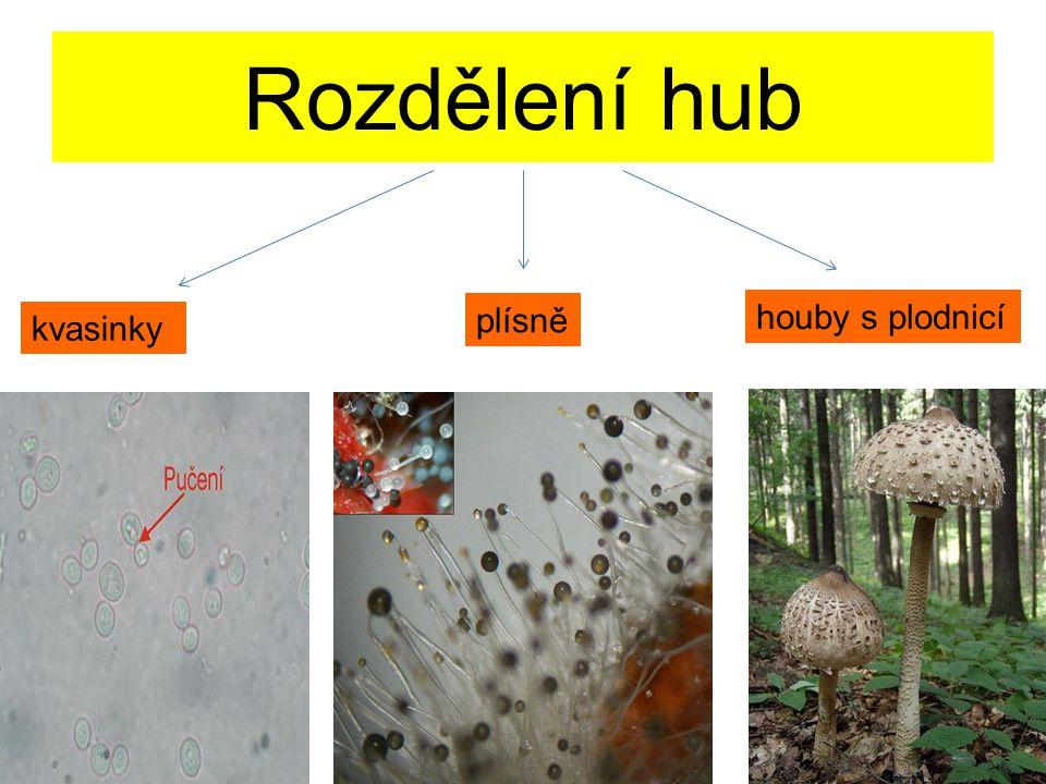 Rozdělení hub plísně houby s plodnicí kvasinky