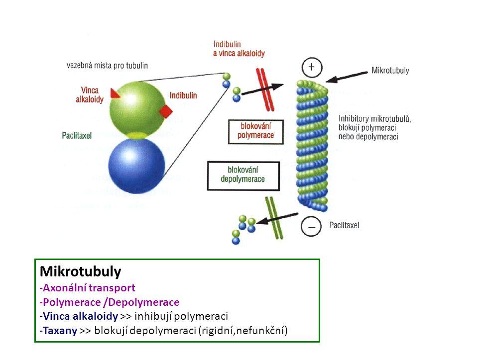 Mikrotubuly Axonální transport Polymerace /Depolymerace