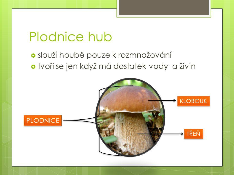 Plodnice hub slouží houbě pouze k rozmnožování