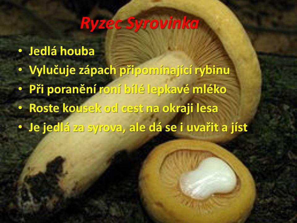 Ryzec Syrovinka Jedlá houba Vylučuje zápach připomínající rybinu