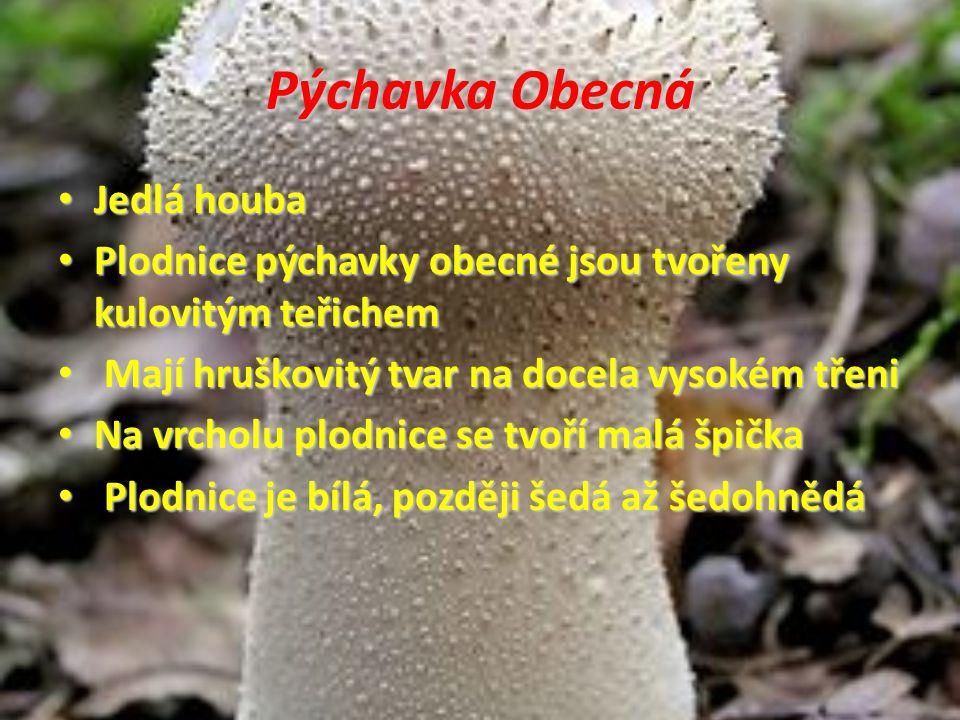 Pýchavka Obecná Jedlá houba