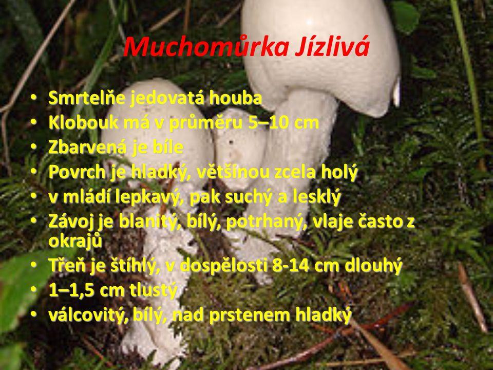 Muchomůrka Jízlivá Smrtelňe jedovatá houba
