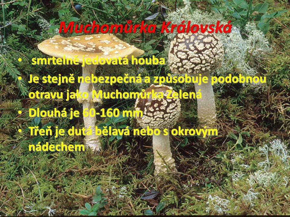 Muchomůrka Královská smrtelně jedovatá houba