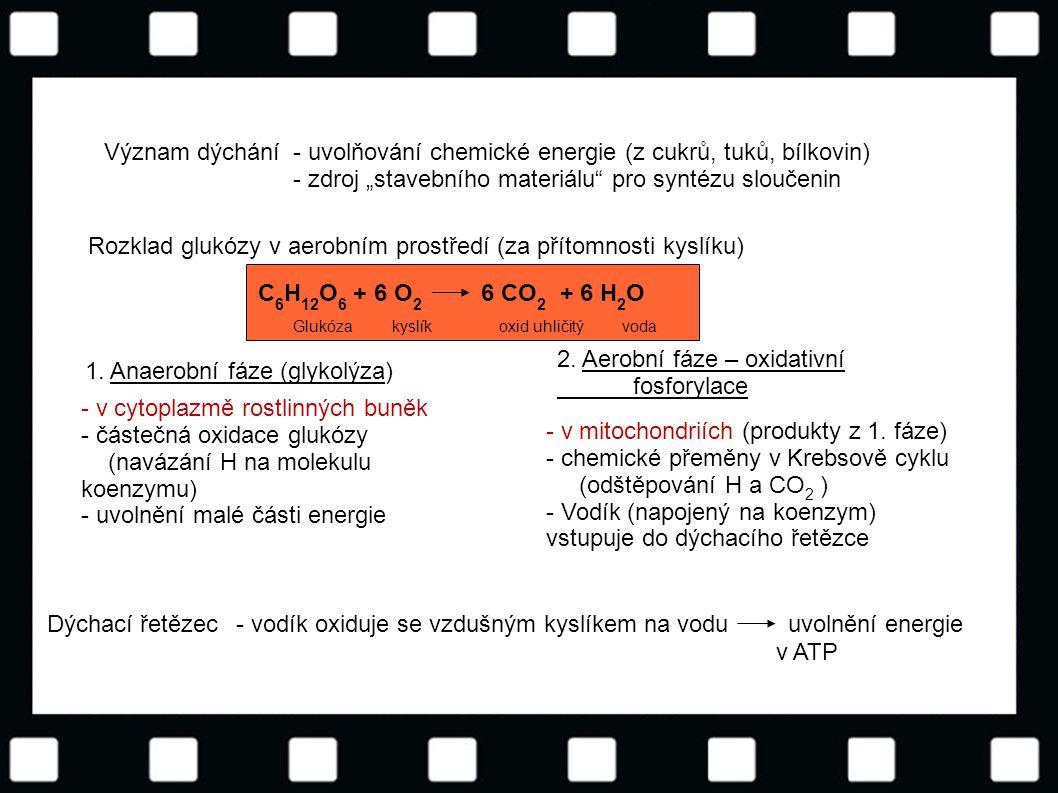 - uvolňování chemické energie (z cukrů, tuků, bílkovin)
