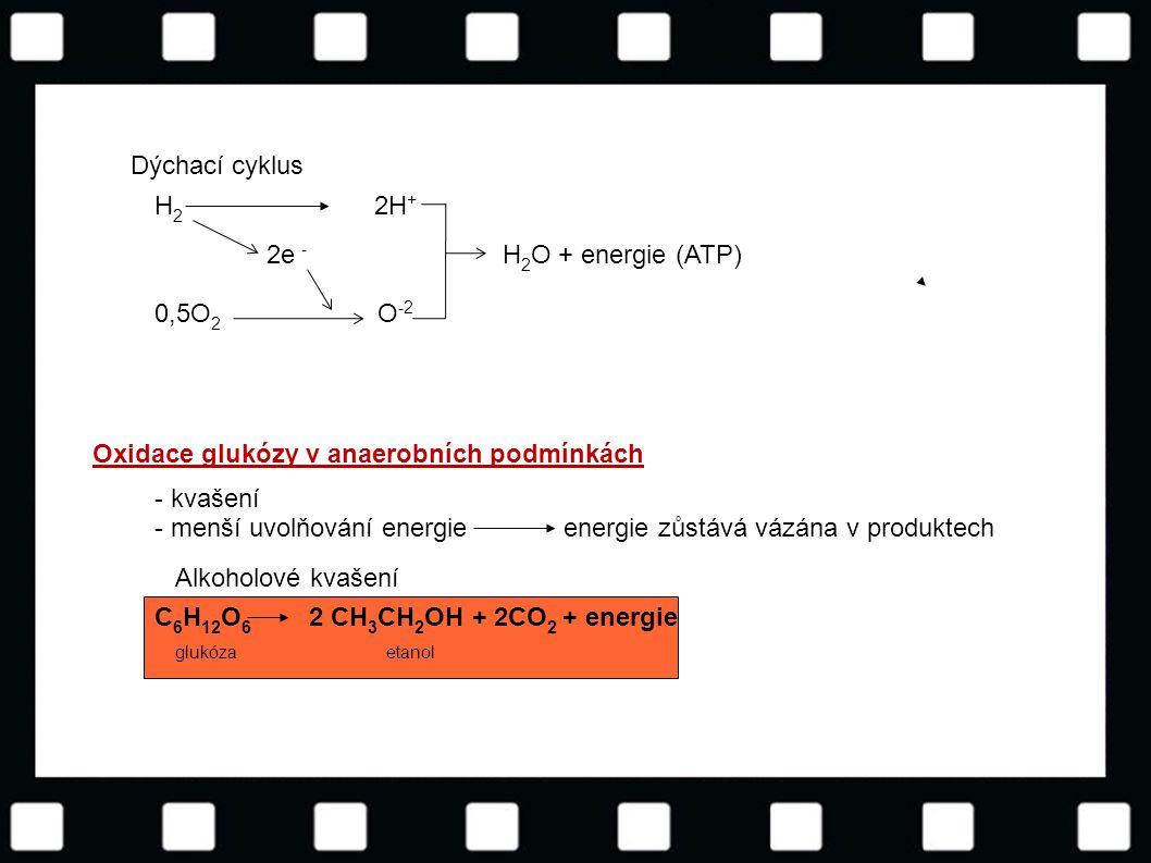 Oxidace glukózy v anaerobních podmínkách