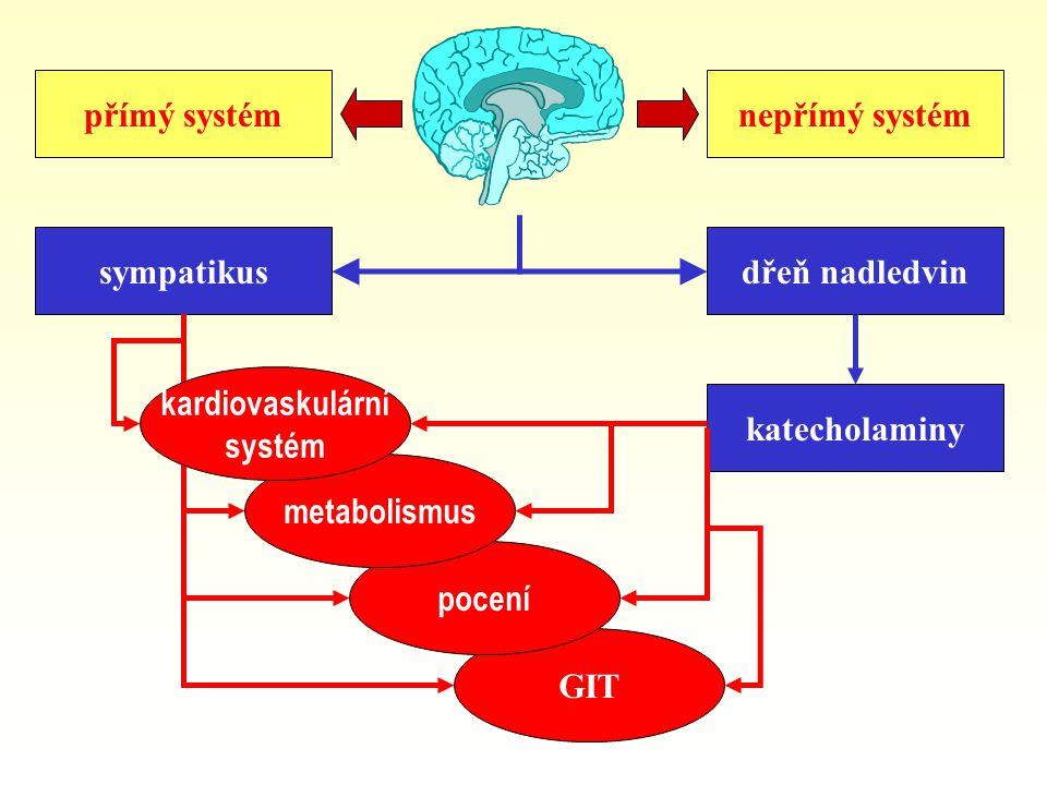 přímý systém nepřímý systém. sympatikus. dřeň nadledvin. kardiovaskulární. systém. katecholaminy.