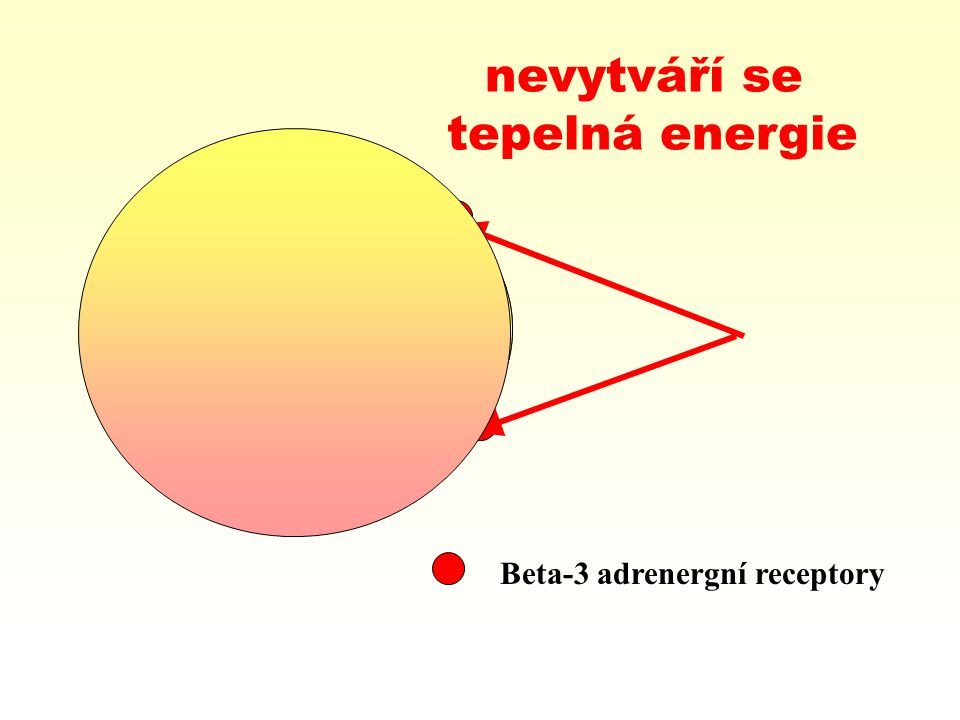 Beta-3 adrenergní receptory