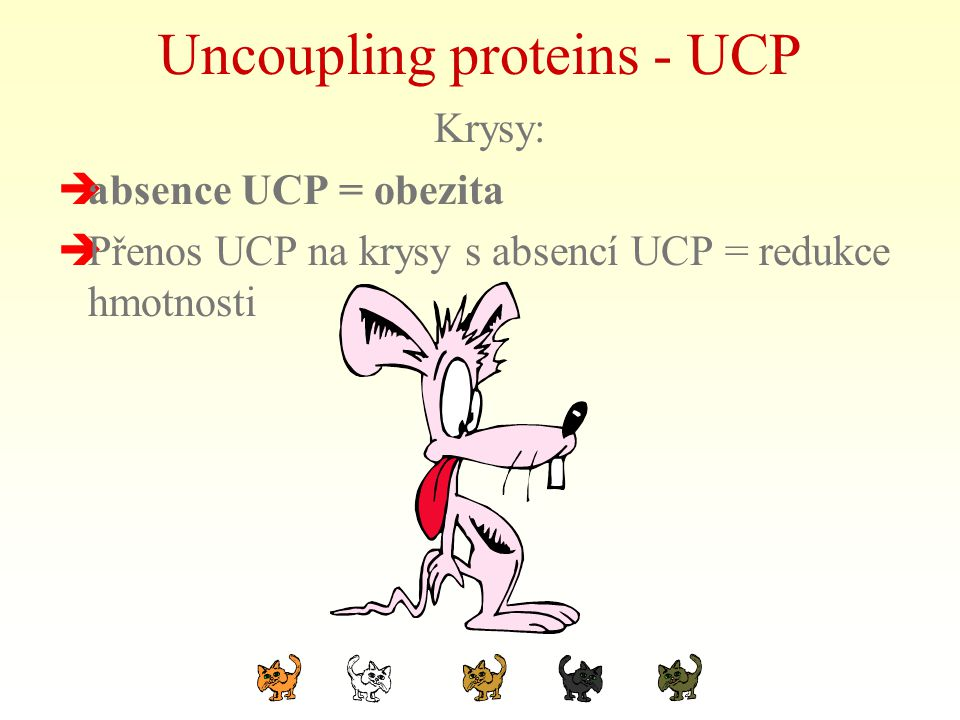 Uncoupling proteins - UCP