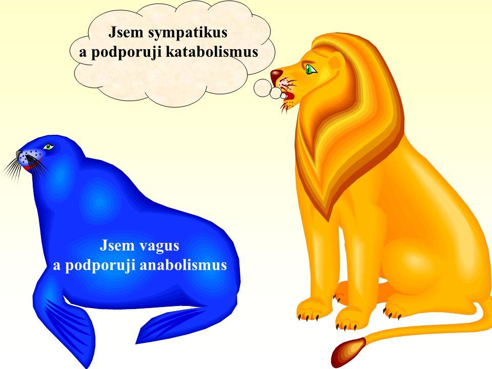 a podporuji katabolismus a podporuji anabolismus