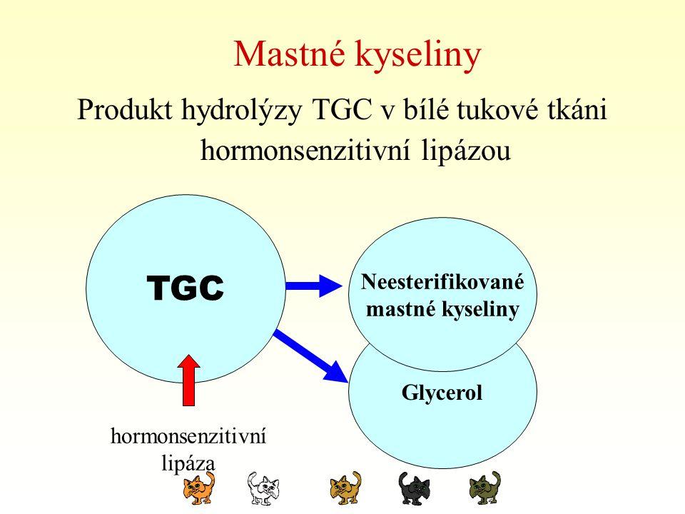 Produkt hydrolýzy TGC v bílé tukové tkáni hormonsenzitivní lipázou