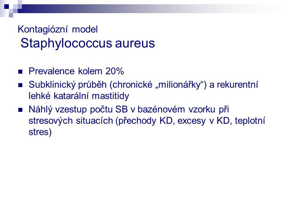 Kontagiózní model Staphylococcus aureus