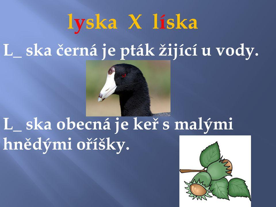 lyska X líska y L_ ska černá je pták žijící u vody.