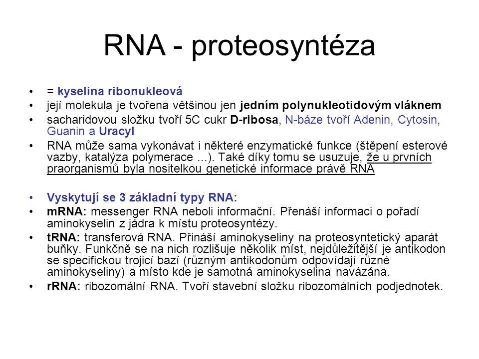 RNA - proteosyntéza = kyselina ribonukleová