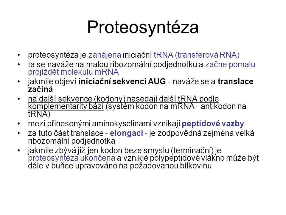 Proteosyntéza proteosyntéza je zahájena iniciační tRNA (transferová RNA)