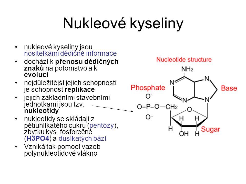 Nukleové kyseliny nukleové kyseliny jsou nositelkami dědičné informace