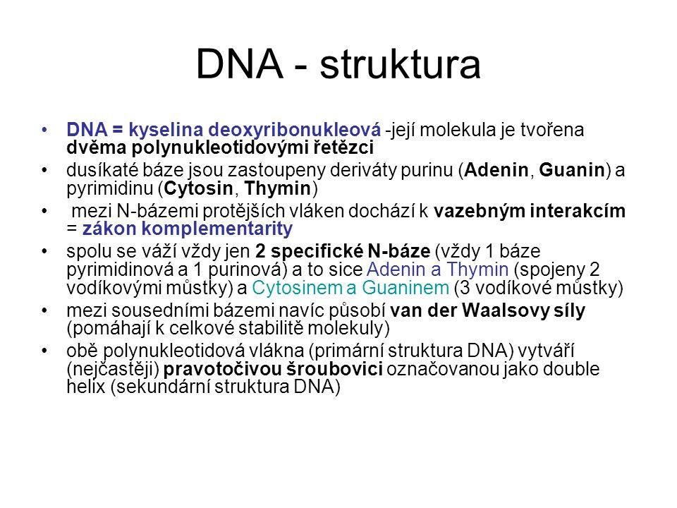 DNA - struktura DNA = kyselina deoxyribonukleová -její molekula je tvořena dvěma polynukleotidovými řetězci.