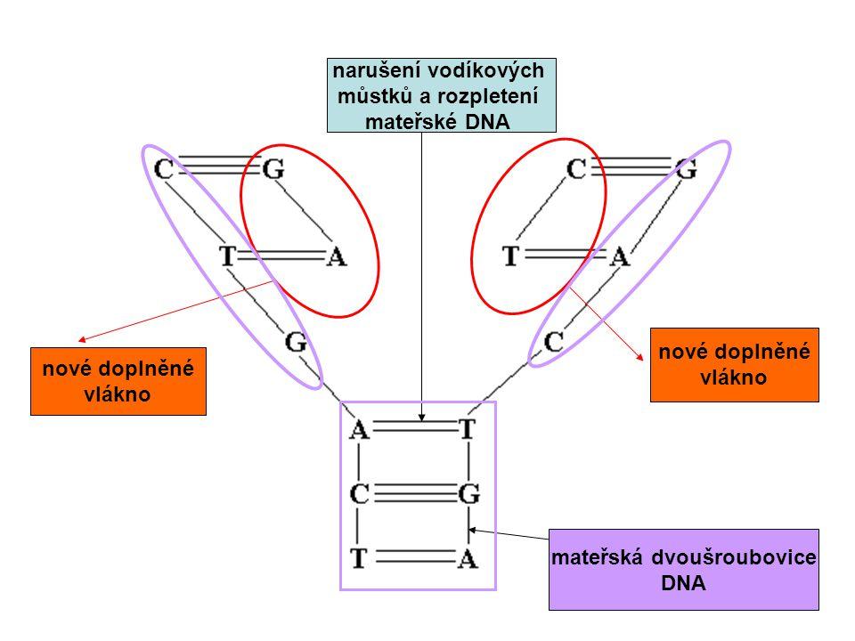 mateřská dvoušroubovice