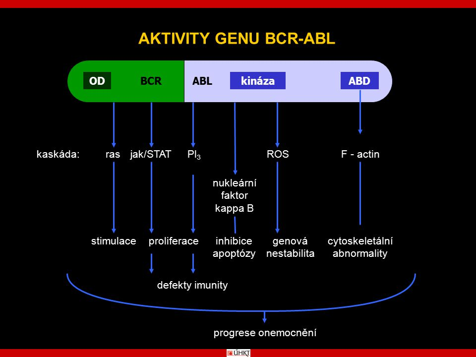 AKTIVITY GENU BCR-ABL OD BCR ABL kináza ABD kaskáda: ras jak/STAT Pl3