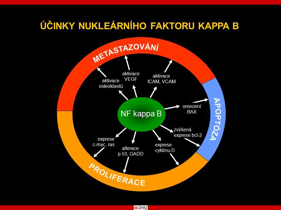 ÚČINKY NUKLEÁRNÍHO FAKTORU KAPPA B