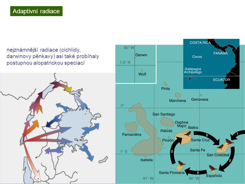 Adaptivní radiace nejznámnější radiace (cichlidy, darwinovy pěnkavy) asi také probíhaly postupnou alopatrickou speciací.