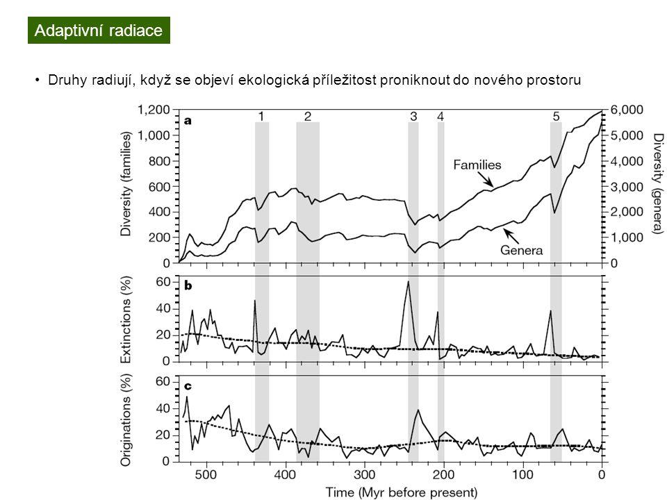 Adaptivní radiace Druhy radiují, když se objeví ekologická příležitost proniknout do nového prostoru.