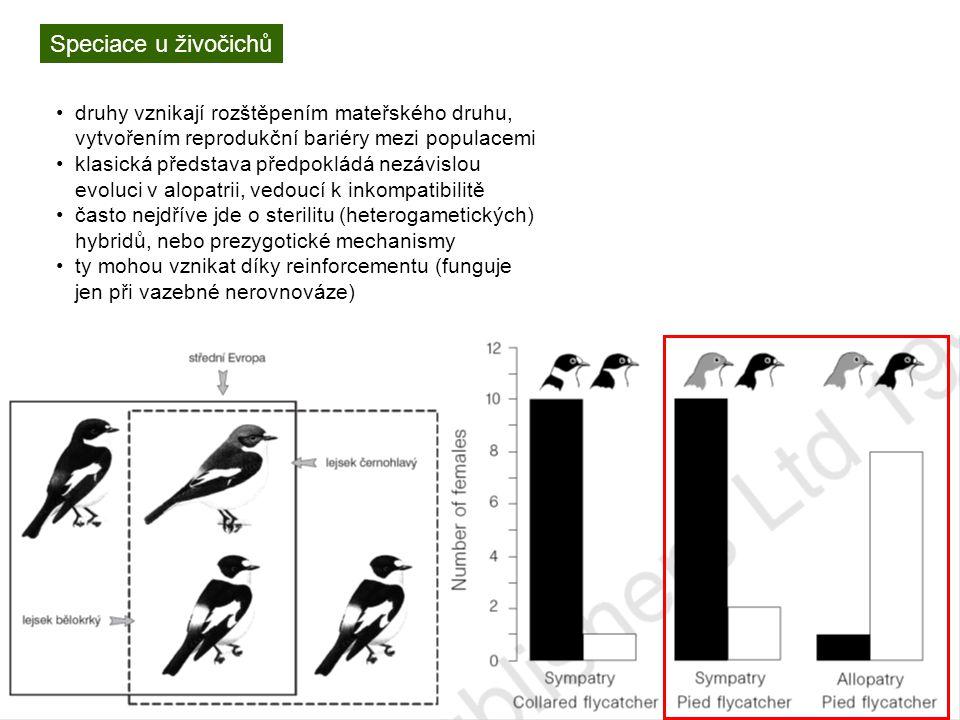 Speciace u živočichů druhy vznikají rozštěpením mateřského druhu, vytvořením reprodukční bariéry mezi populacemi.