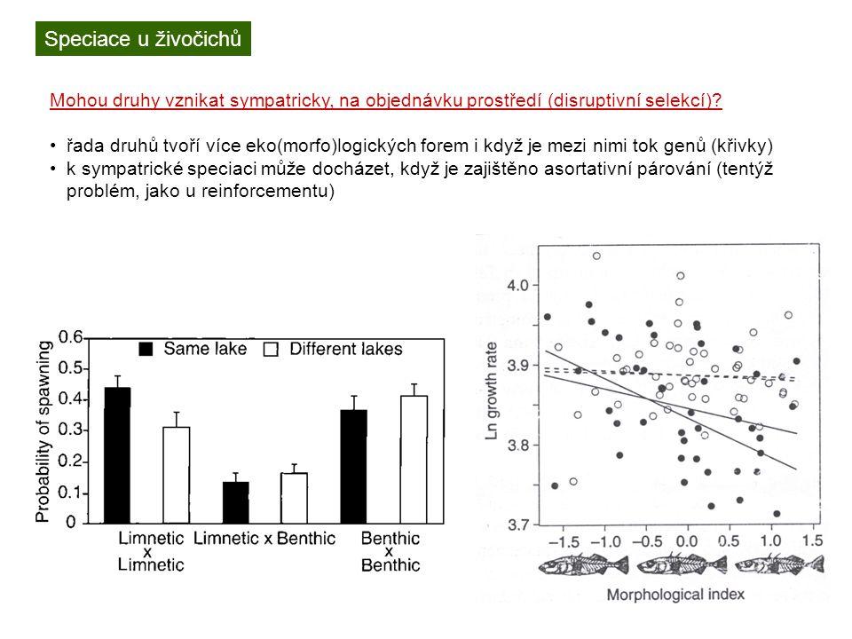 Speciace u živočichů Mohou druhy vznikat sympatricky, na objednávku prostředí (disruptivní selekcí)