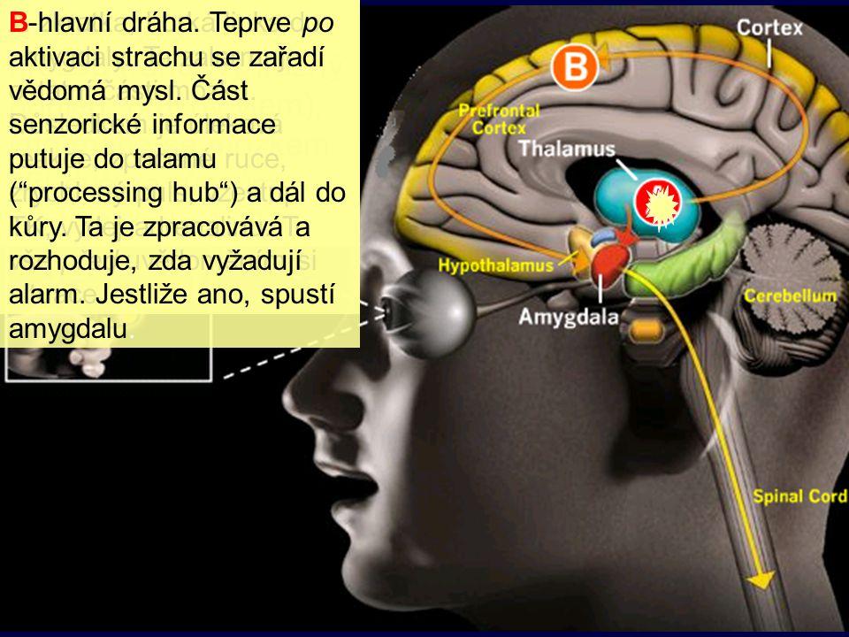 B-hlavní dráha. Teprve po aktivaci strachu se zařadí vědomá mysl