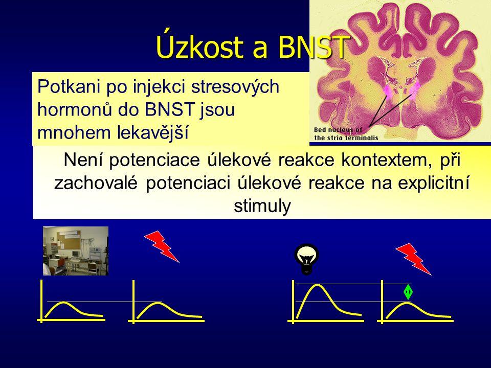 Úzkost a BNST Potkani po injekci stresových hormonů do BNST jsou mnohem lekavější. Léze BNST.