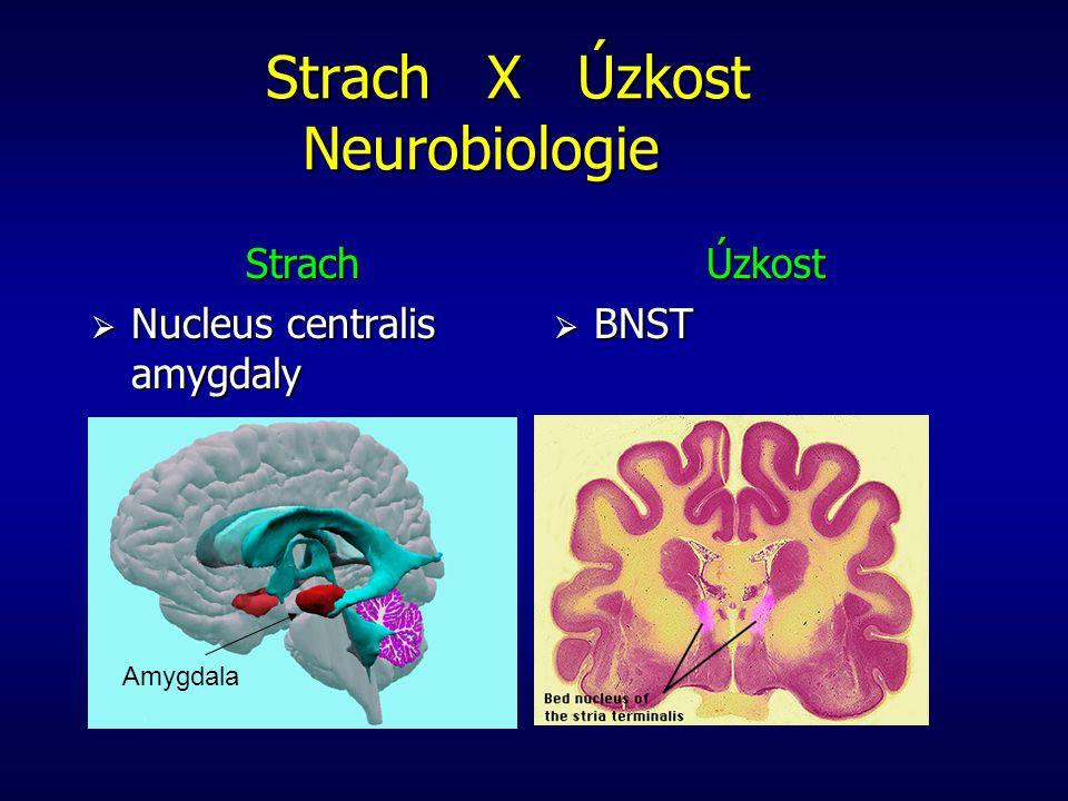 Strach X Úzkost Neurobiologie