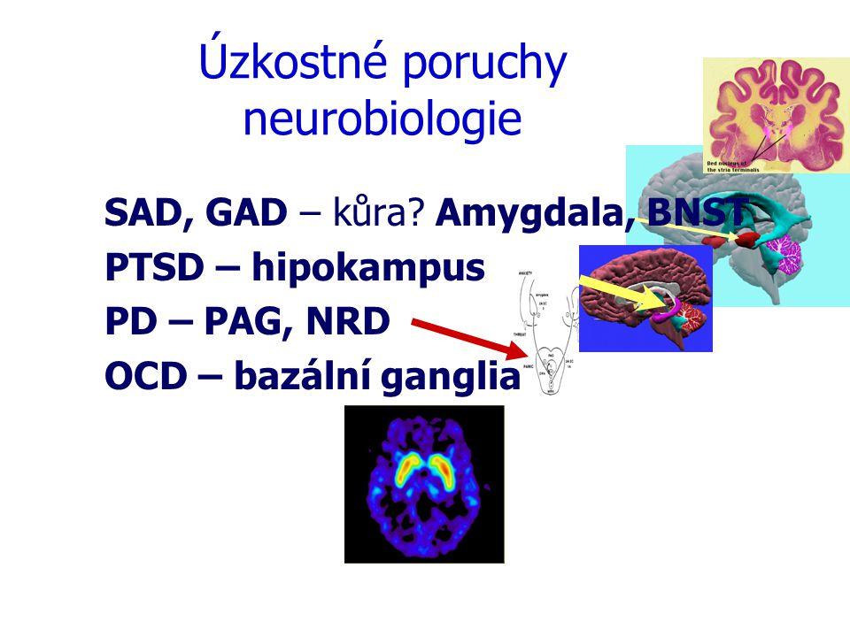 Úzkostné poruchy neurobiologie