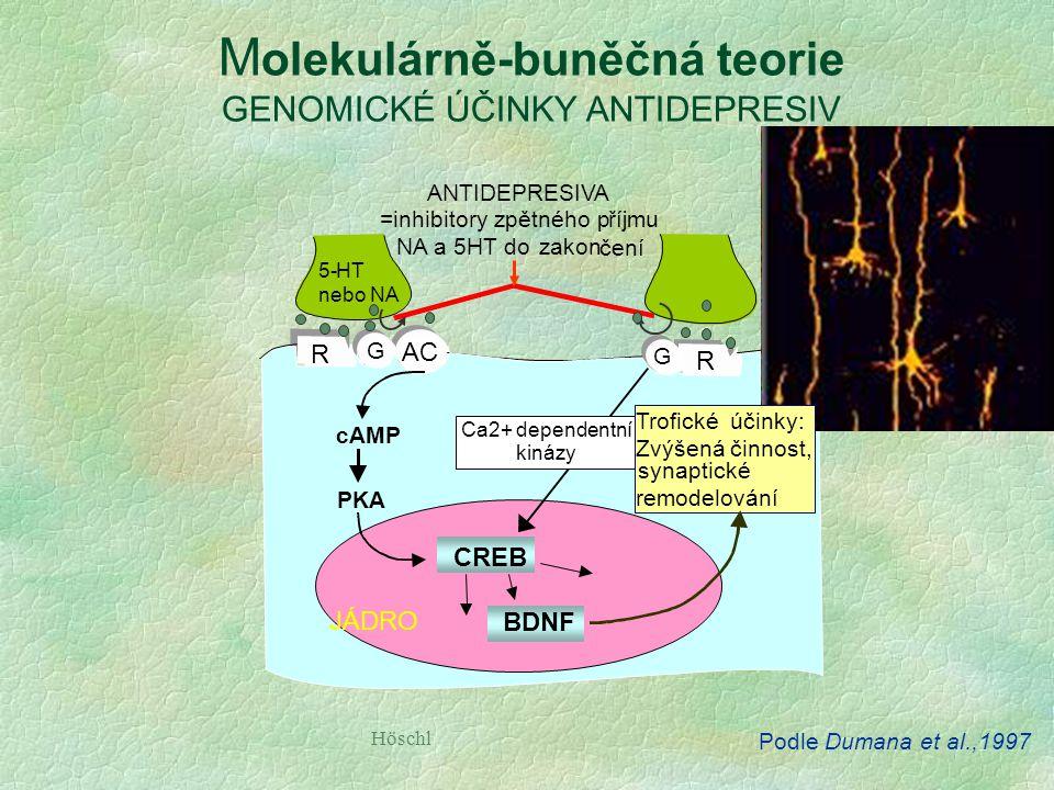 Molekulárně-buněčná teorie GENOMICKÉ ÚČINKY ANTIDEPRESIV