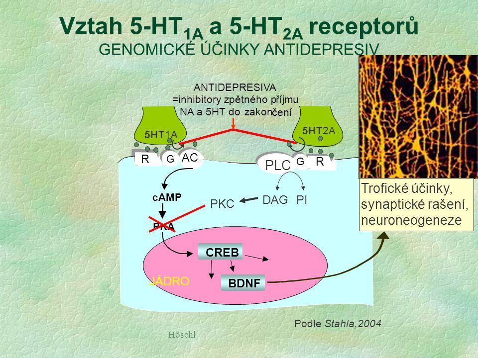 Vztah 5-HT1A a 5-HT2A receptorů GENOMICKÉ ÚČINKY ANTIDEPRESIV