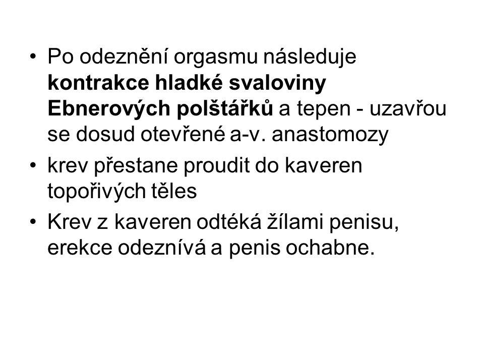 Po odeznění orgasmu následuje kontrakce hladké svaloviny Ebnerových polštářků a tepen - uzavřou se dosud otevřené a-v. anastomozy