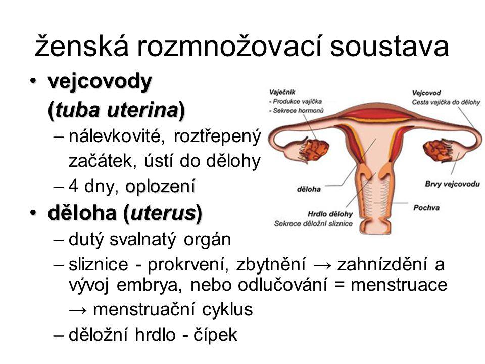 ženská rozmnožovací soustava
