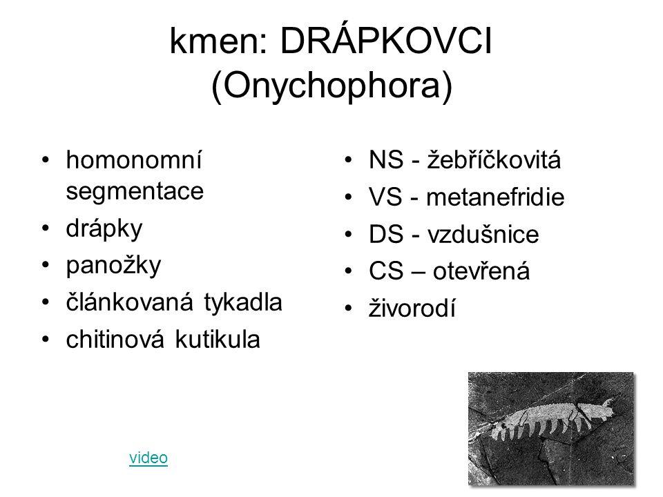 kmen: DRÁPKOVCI (Onychophora)