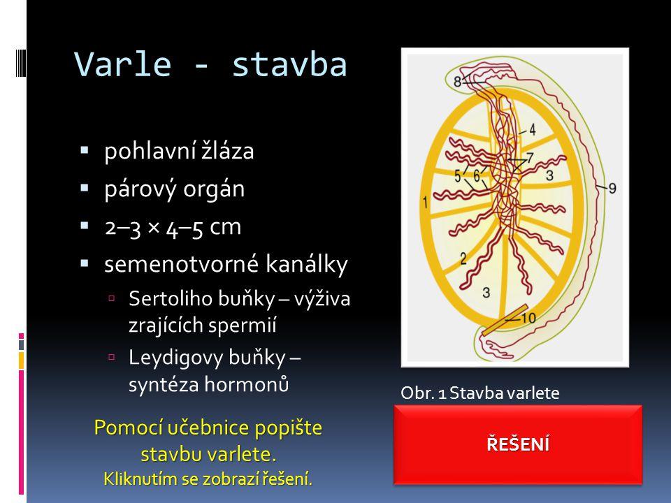 Varle - stavba pohlavní žláza párový orgán 2–3 × 4–5 cm