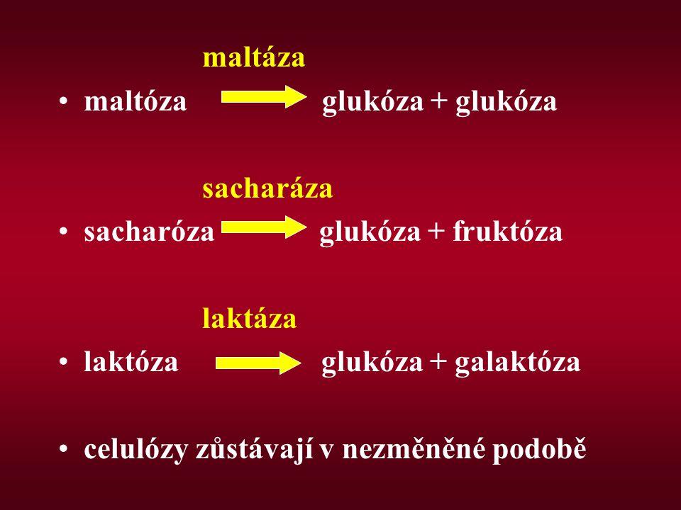 maltáza maltóza glukóza + glukóza. sacharáza. sacharóza glukóza + fruktóza.