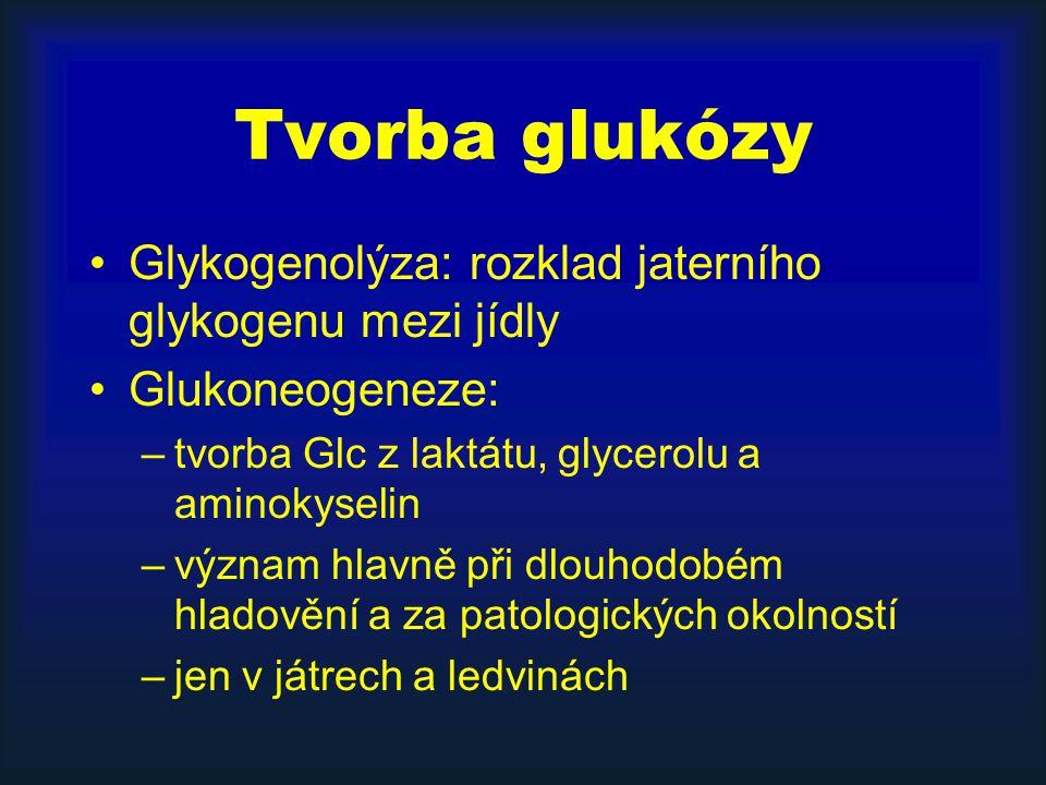 Tvorba glukózy Glykogenolýza: rozklad jaterního glykogenu mezi jídly