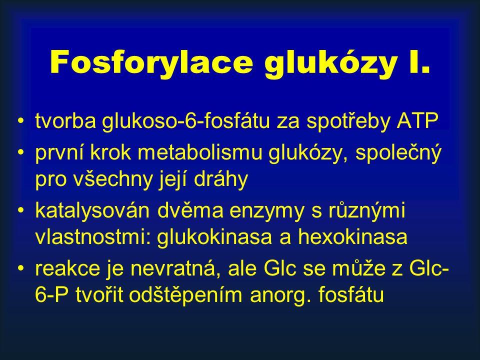 Fosforylace glukózy I. tvorba glukoso-6-fosfátu za spotřeby ATP