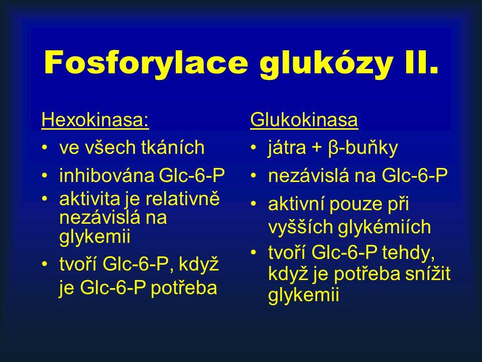 Fosforylace glukózy II.