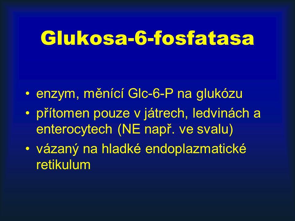 Glukosa-6-fosfatasa enzym, měnící Glc-6-P na glukózu
