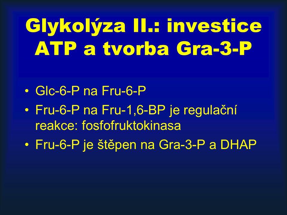 Glykolýza II.: investice ATP a tvorba Gra-3-P