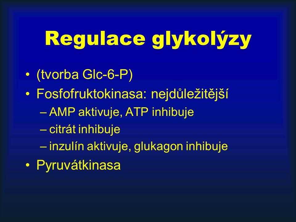 Regulace glykolýzy (tvorba Glc-6-P) Fosfofruktokinasa: nejdůležitější
